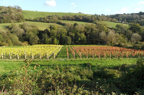 Sidbury Vineyard